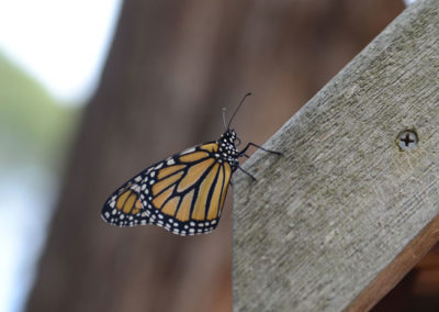 Outdoor-Gallery---Butterfly